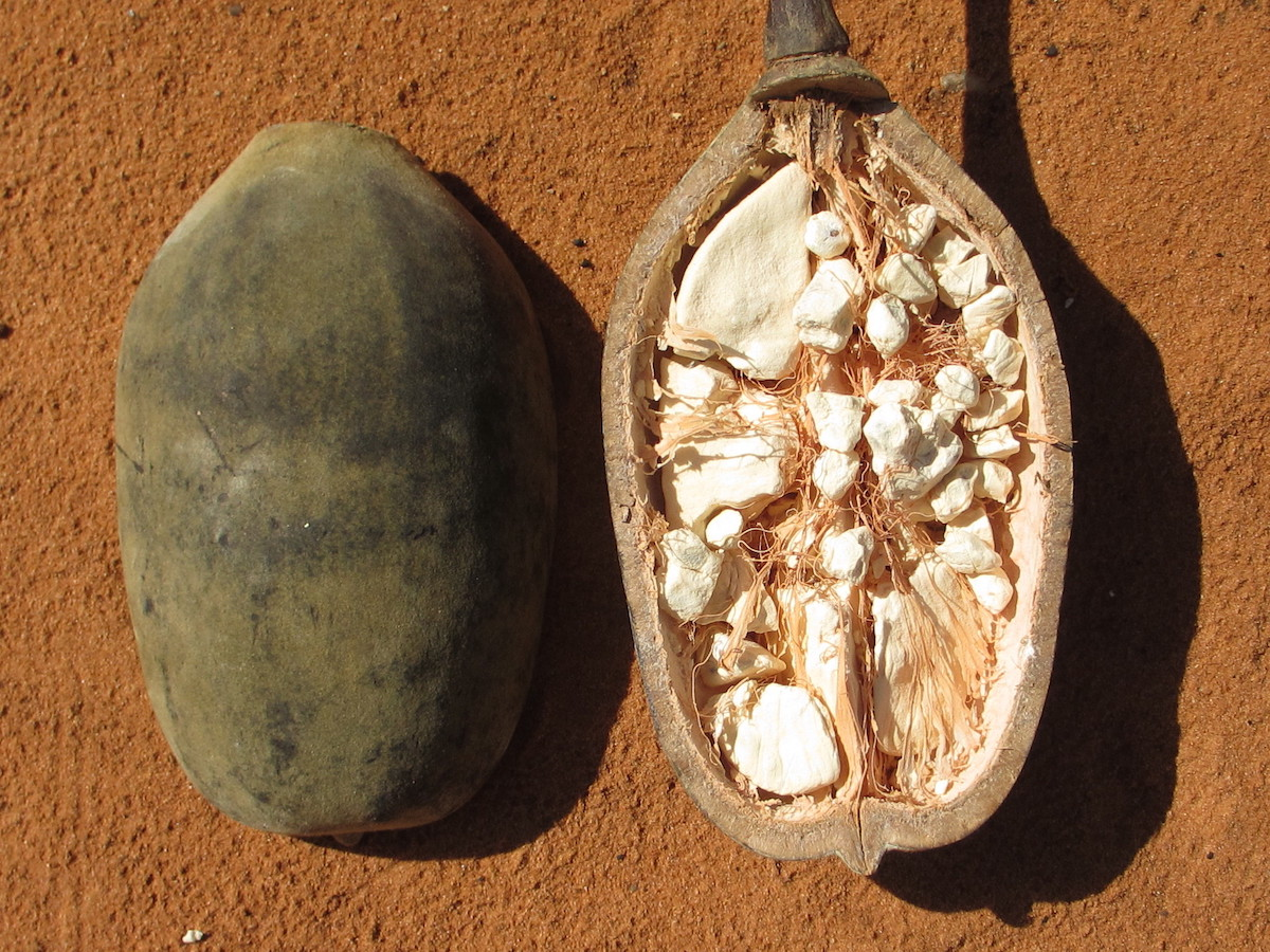 Baobabfrukten på skönhetssnack.se